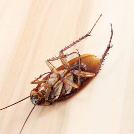 Эффективные методы уничтожения тараканов